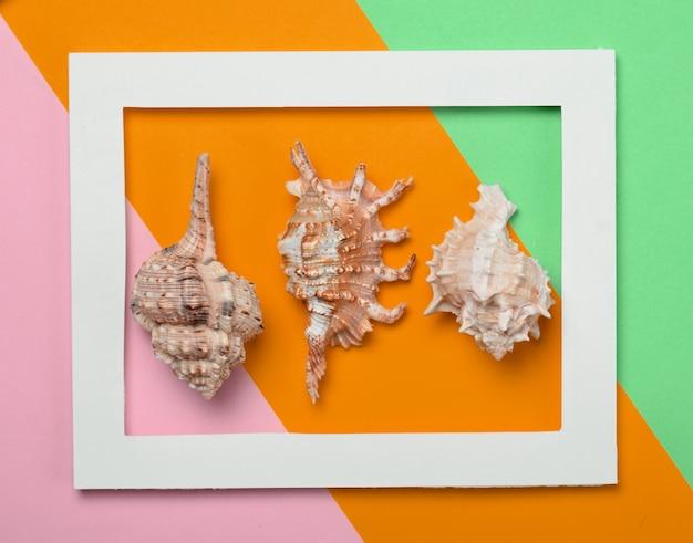 Conchas do mar diferentes em uma moldura retangular branca sobre um fundo colorido pastel