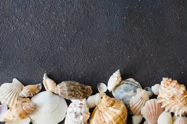 Conchas do mar diferentes na superfície de concreto escuro