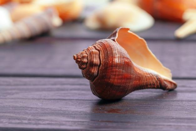 Conchas do mar diferentes