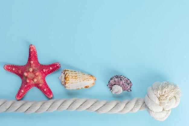 Conchas do mar e estrelas do mar, com espaço de cópia. férias de verão e o conceito de férias