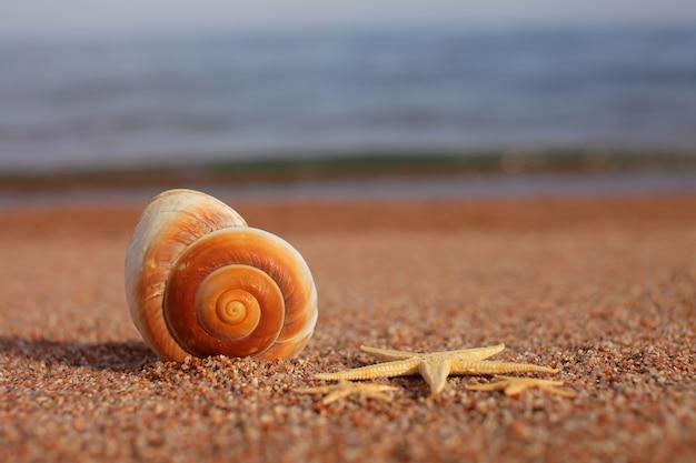 Conchas do mar e estrelas do mar na praia. praia com ondas. conceito de férias de verão. férias à beira-mar.