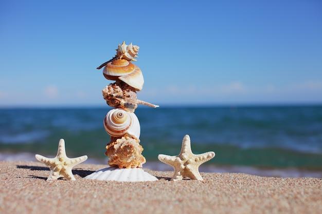 Conchas do mar e estrelas do mar na praia