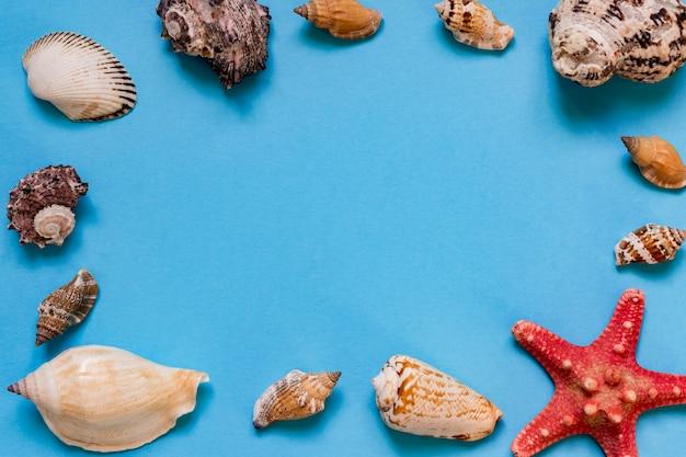 Conchas do mar e estrelas do mar sobre fundo azul claro, com espaço de cópia. férias de verão e o conceito de férias
