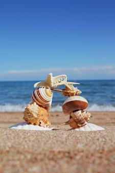 Conchas do mar e estrelas na praia.