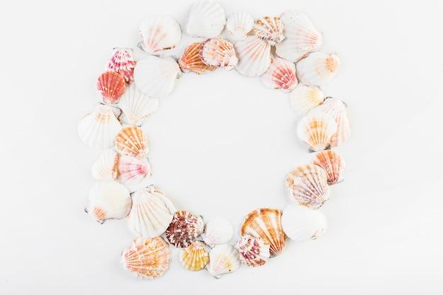 Conchas do mar em círculo