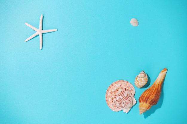 Conchas do mar em fundo azul, vista superior