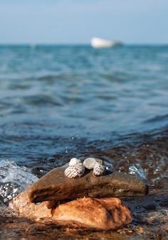 Conchas do mar em uma pedra close up no fundo do mar mediterrâneo na tunísia