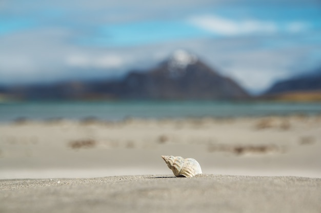 Conchas do mar em uma praia de areia contra o fundo do mar e das montanhas