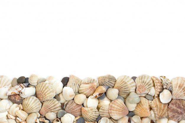 Conchas do mar, fundo branco isolado