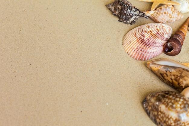 Conchas do mar na areia da praia