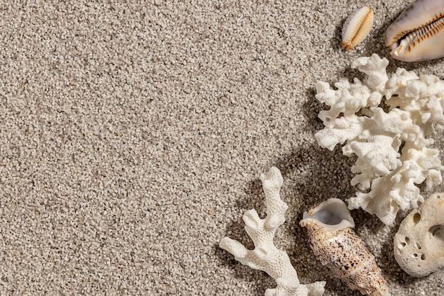 Conchas do mar na areia fundo das férias de verão do mar com vista superior do espaço de cópia