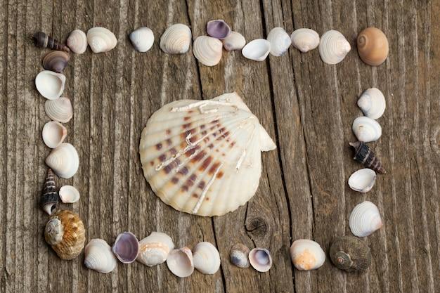 Conchas do mar na madeira