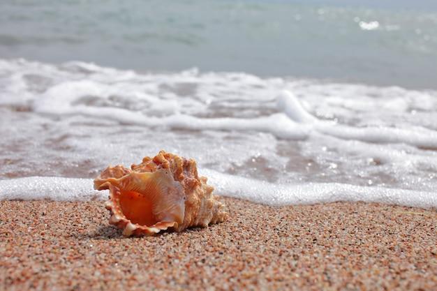 Conchas do mar na praia. praia com ondas. conceito de férias de verão. férias à beira-mar.