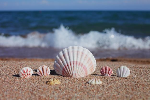 Conchas do mar na praia. praia com ondas.
