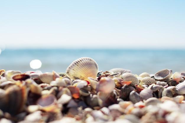 Conchas do mar na praia