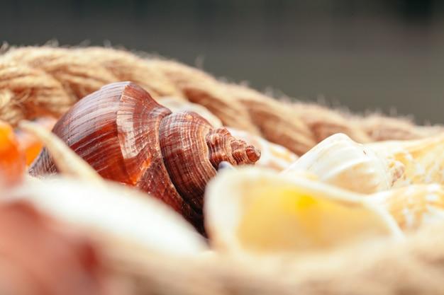 Conchas do mar. natureza.
