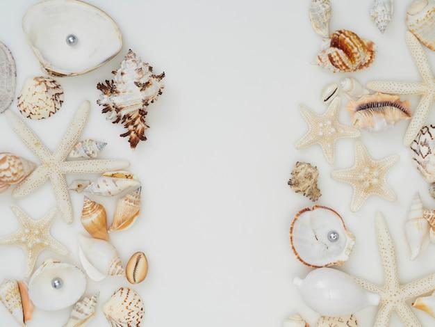 Conchas do mar no fundo branco