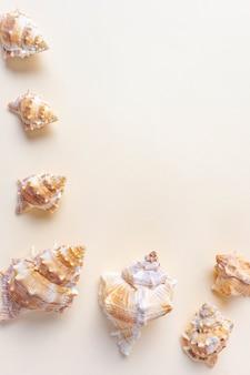 Conchas do mar. o conceito de férias, mar, verão, viagens, decoração. rapana. vista superior, plana leigos, copyspace.