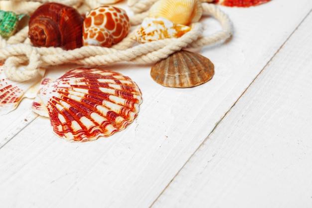 Conchas do mar sobre fundo de madeira.