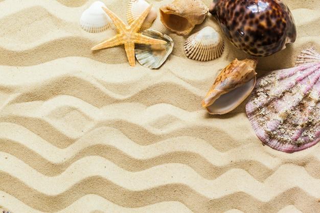 Conchas do mar sobre o fundo de areia da praia