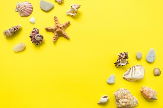 Conchas do mar sobre um fundo amarelo. idéia de composição de férias de verão. configuração plana