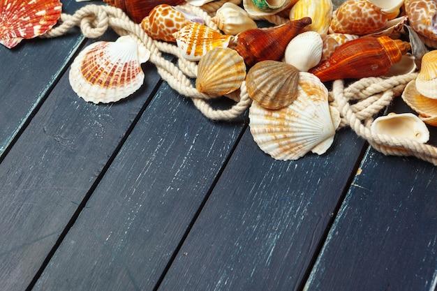 Conchas do mar.