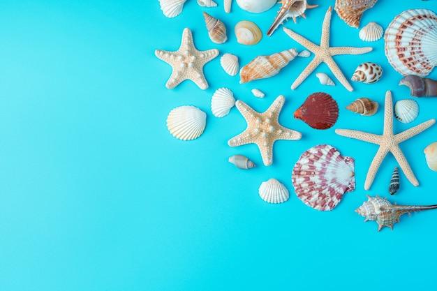Conchas e estrelas do mar em um fundo azul