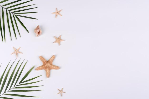 Conchas e estrelas do mar em um fundo branco. fundo de verão Foto Premium