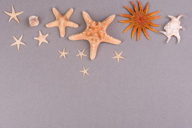 Conchas e estrelas do mar em uma superfície colorida