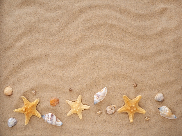 Conchas e estrelas do mar encontram-se na areia.