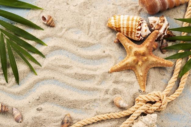 Conchas e estrelas do mar na areia