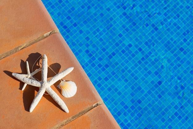 Conchas e estrelas do mar perto da água da piscina