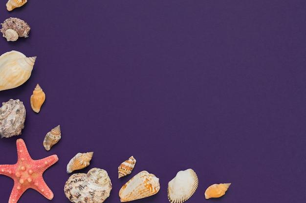 Conchas e estrelas do mar sobre fundo violeta, com espaço de cópia. férias de verão e o conceito de férias