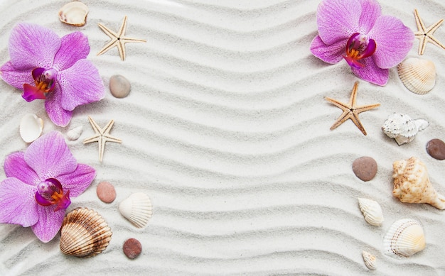 Conchas e fronteira de estrelas do mar