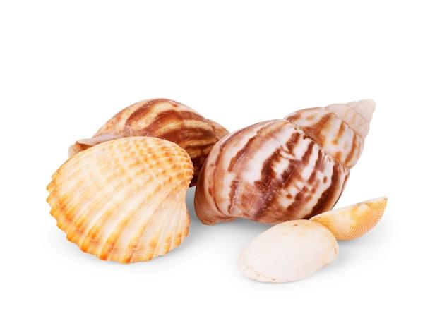 Conchas isoladas com fundo branco