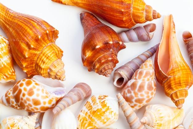 Conchas isoladas