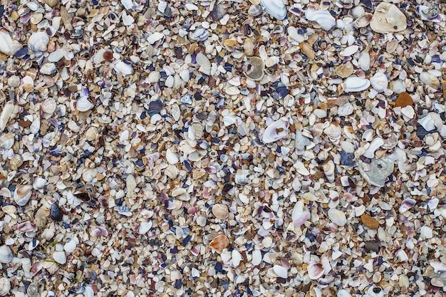 Conchas multicoloridas na praia