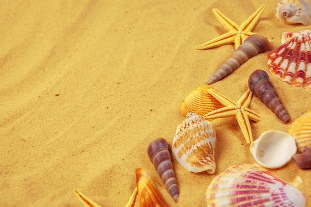 Conchas na areia. fundo de férias de verão do mar