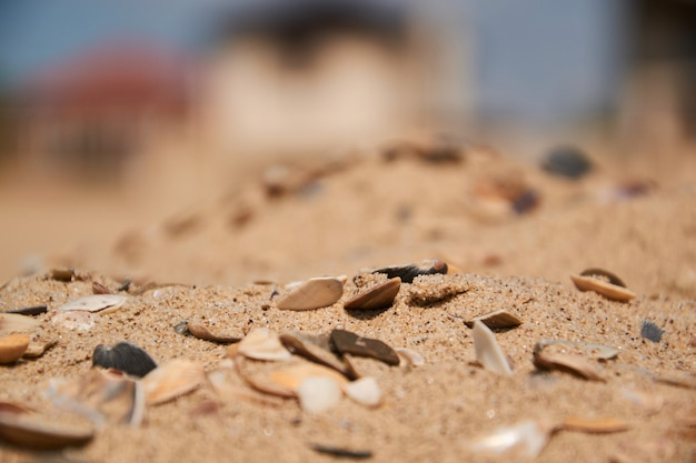 Conchas na areia no fundo da praia. foco seletivo
