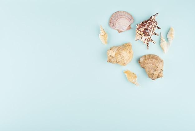 Conchas na vista superior azul