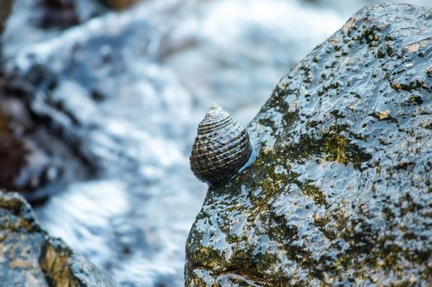 Conchas nas rochas no mar