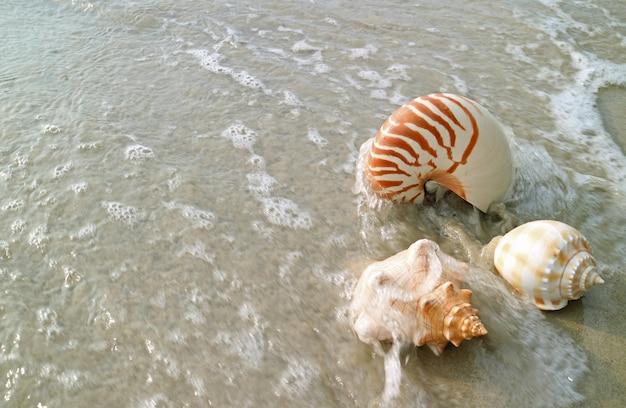 Conchas naturais na praia de areia batendo pela onda, tailândia