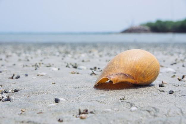 Conchas são colocadas na areia à beira-mar. belas conchas amarelas