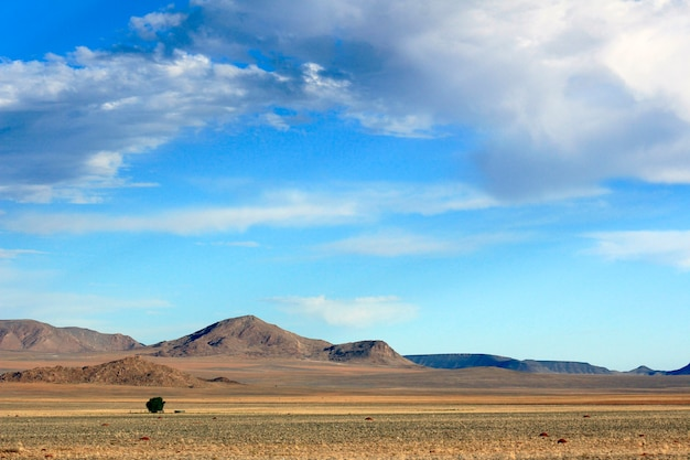Condições adversas da savana quente Foto Premium