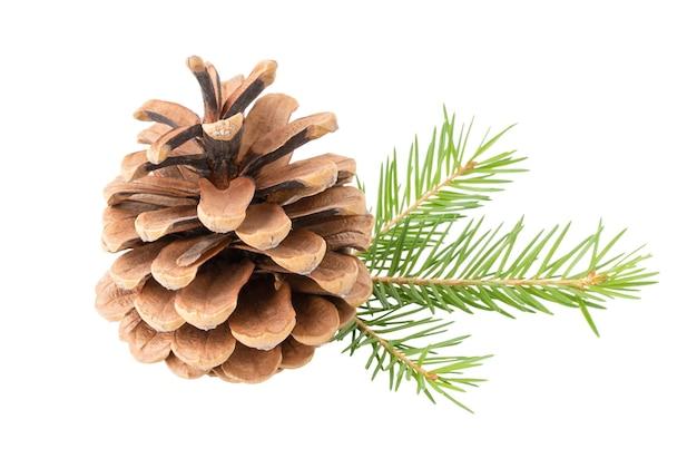 Cone com galho de árvore de natal isolado no fundo branco