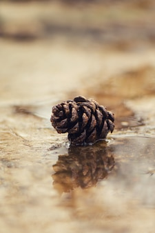 Cone de abeto no pavimento molhado com reflexão. conceito de outono