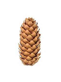 Cone fir. cones de abetos vermelhos isolados no fundo branco.