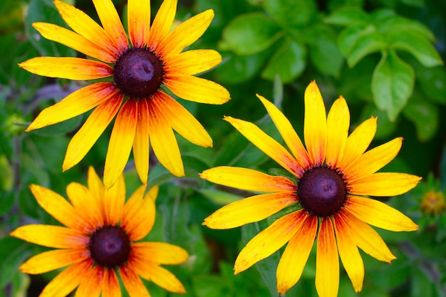 Cone-flor grande amarelo