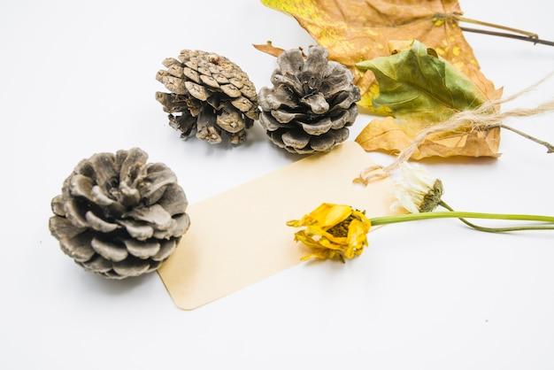 Cones com flores secas