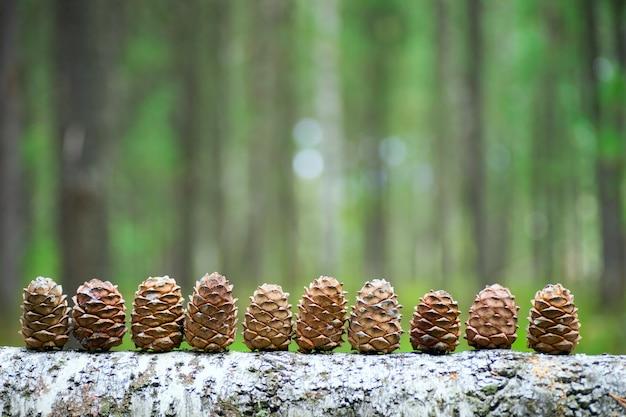 Cones de cedro alinhados em um log.